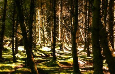 Photo showing woodland from the Beinn Ghuilean Forestry trails